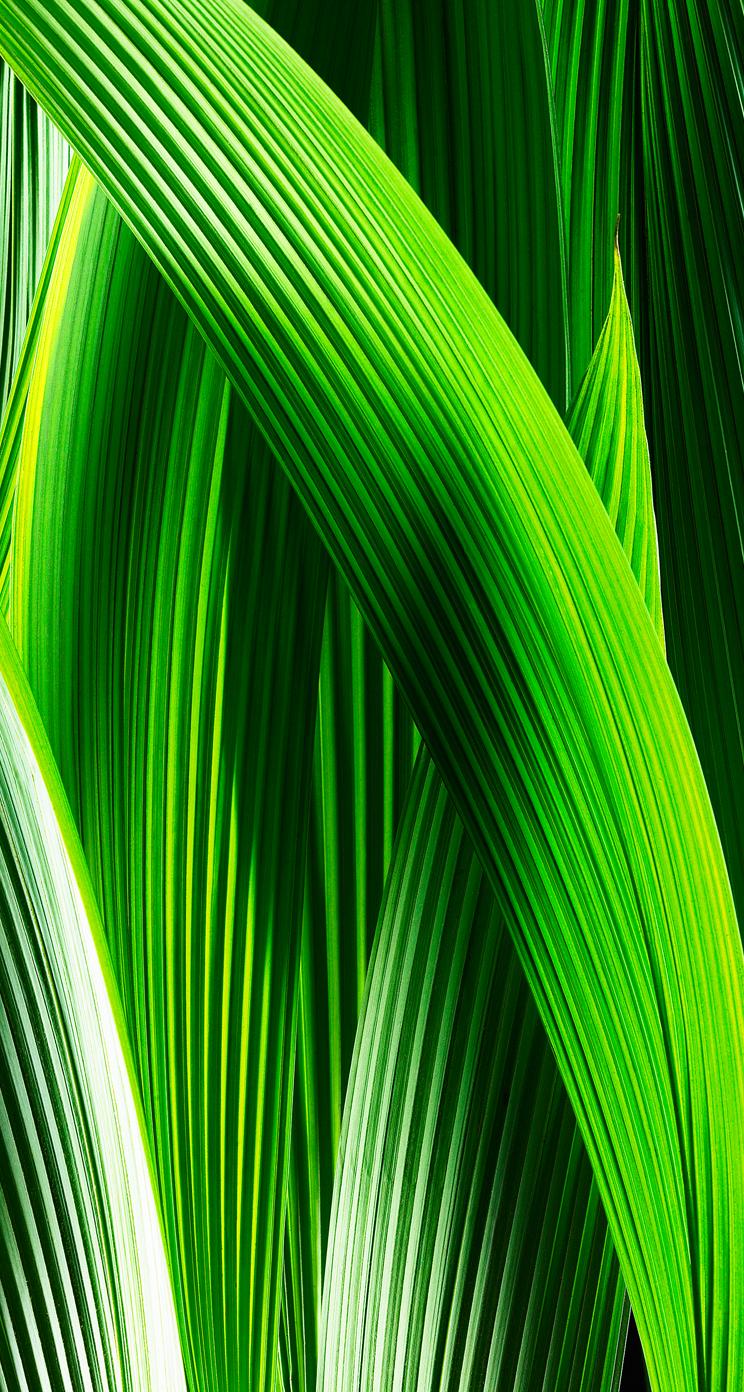 gruenzeug iOS 7 Wallpaper heute schon nutzen: Download