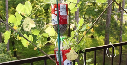 Hydrokultur-System-Plastikflaschen