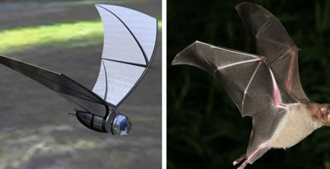 Fledermaus-Roboter: Autonome Rettungsdrohnen