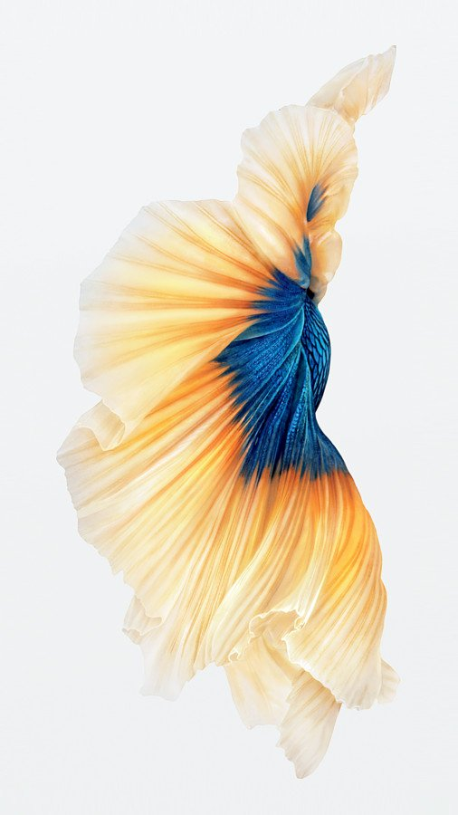 iPhone-6s-Fish-Gold-Wallpaper